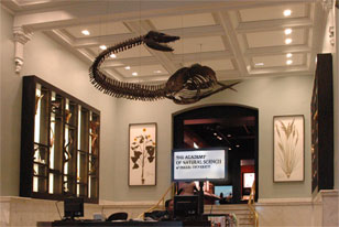 lobby with a view of Elasmosaurus skeleton