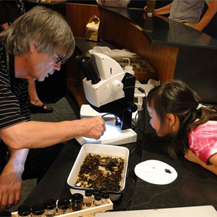scientist and girl check out insect specimens