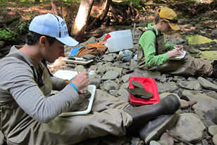 field crew monitoring macroinvertebrates in a Pennsylvania stream