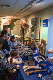 Visitors inspect fossils at Paleopalooza