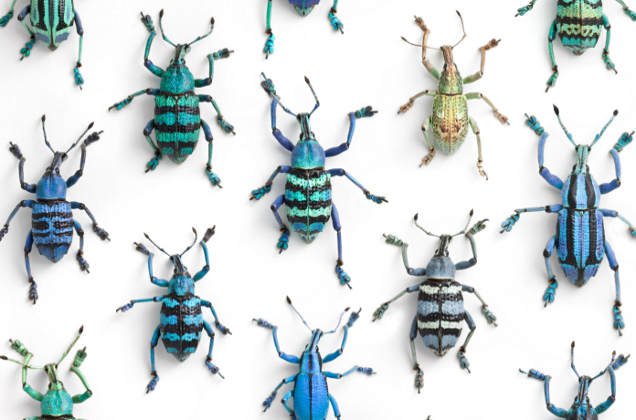 Pinned Insect Art Insect Science