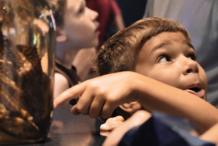 child looking at catfish specimen in jar