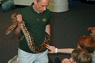 grade school students encounter a ball python during a discovery lesson