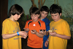 cub scouts looking at specimens
