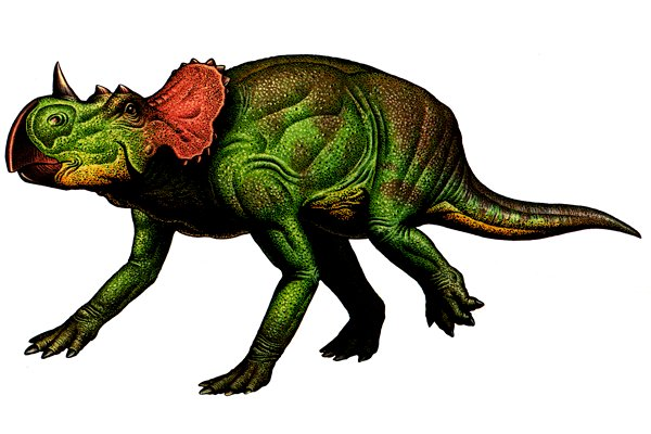 Avaceratops illustration by Robert F. Walters