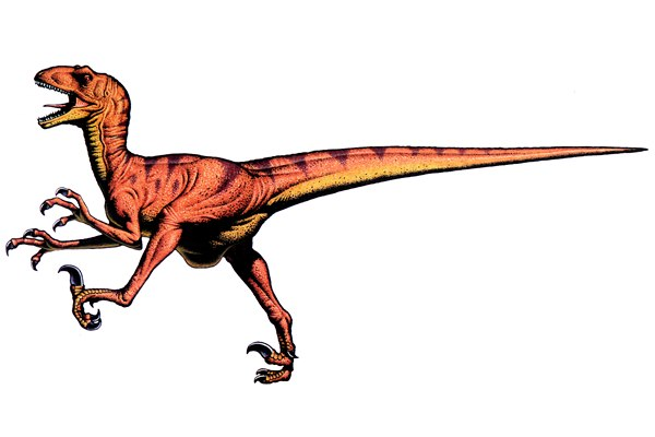 Deinonychus illustration by Robert F. Walters