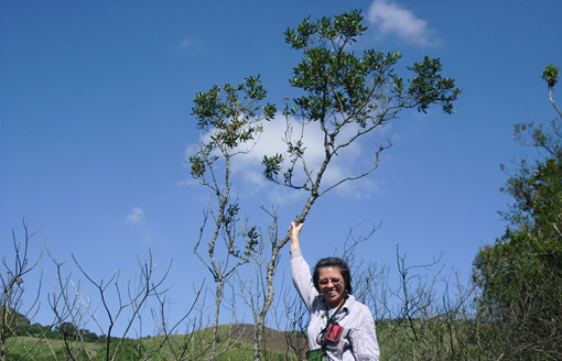 botanist stands next to a treelet in Ecuador