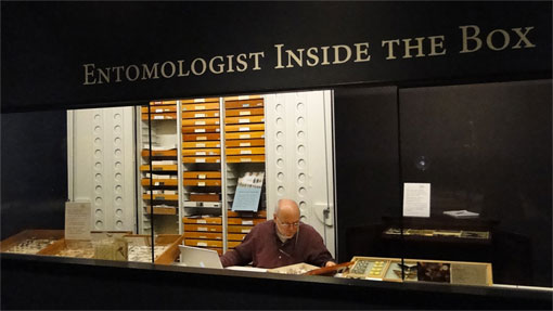 photo of entomologist in a museum exhibit