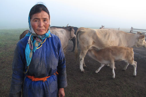 Mongolian herder with some of her cows
