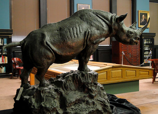 plaster cast of James Lippitt Clark's rhino sculpture in the Academy's Library