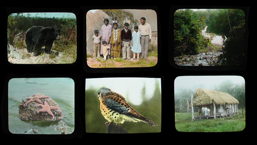 six lantern slides picturing remote people, places and animals