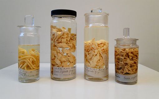 photo of parasite specimens