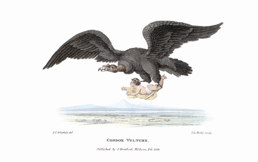 early 19th century illustration of a condor carrying off a human infant