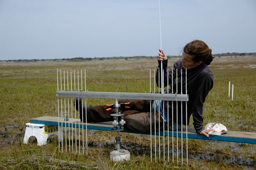 photo of scientist with a wetlands surface elevation table