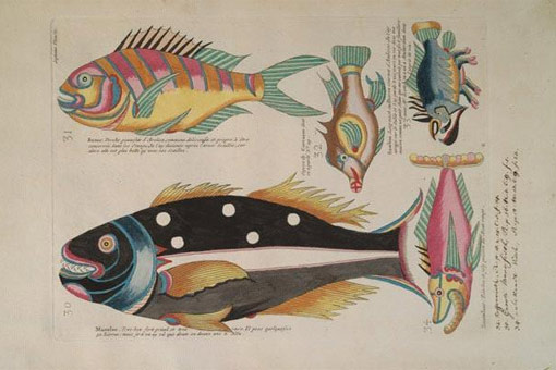 plate from Renard's Fish, crayfishes and crabs that shows five colorful fishes