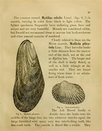 Page from Shells of the Jersey Shore (1891) showing common mussels.