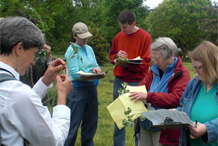 identifying plants during the Useful Urban Plants field study