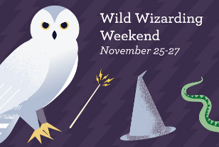wild wizarding weekend