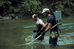 Richard Horwitz and Paul Overbeck sampling fish by backpack electroshocker