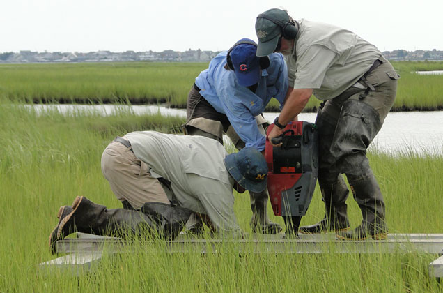 three Patrick Center scientists preparing a elevation benchmark station in a Barnegat Bay wetlands in New Jersey.