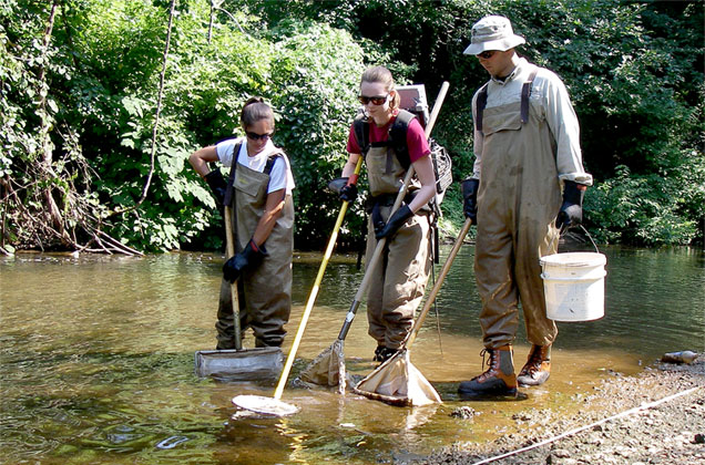 three Patrick Center fisheries biologists electrofishing for American eel in Ridley Creek, Pennsylvania