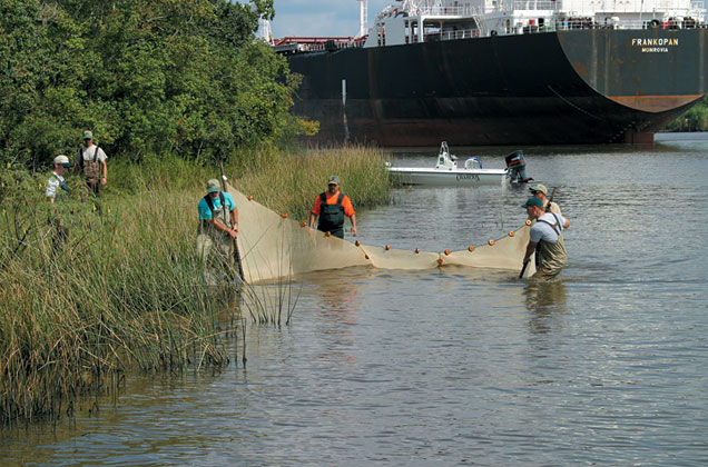 Patrick Center crew seining for fish along the shore on the lower Neches River in Texas
