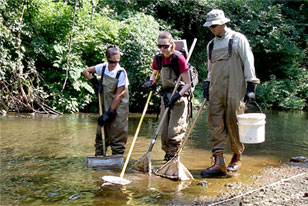field crew sampling for american eels using backpack electorfishing