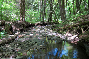 stream and surrounding landscape in Pennsylvania