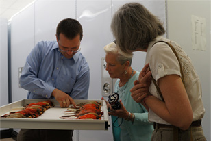 participants look at bird specimens during a Behind-the-Scenes tour of the Ornithology Collection