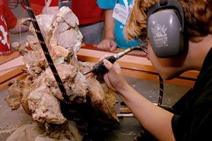 volunteer uses a dremel tool to prepare a dinosaur fossil