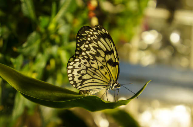 Butterflies! - The Academy of Natural Sciences of Drexel ...