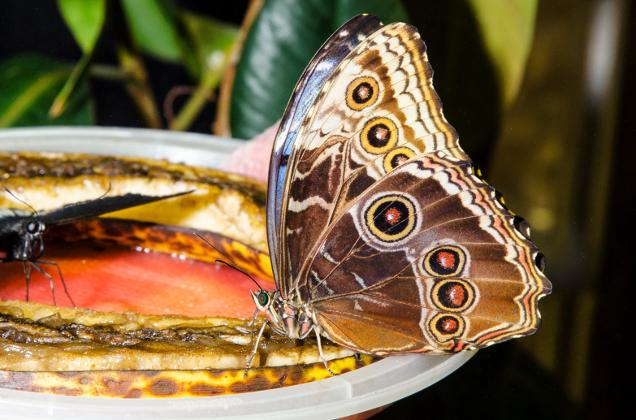 butterflies academy of natural sciences of drexel university