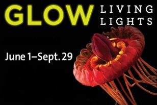 Glow Living Lights