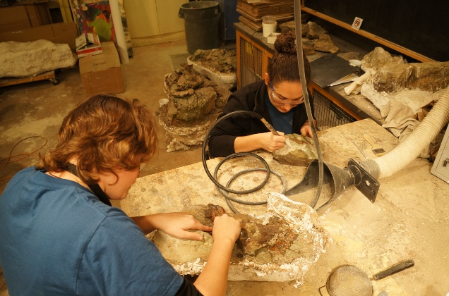 Educators work on dinosaur fossils